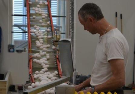 Lars Knutsson bevakar transportbandet med eko-ägg