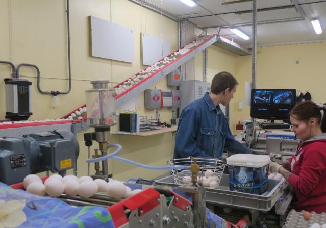 Anton Gustafsson och My Johansson tar hand om första kontrollen av äggen.